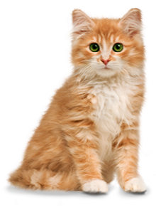 catgroom